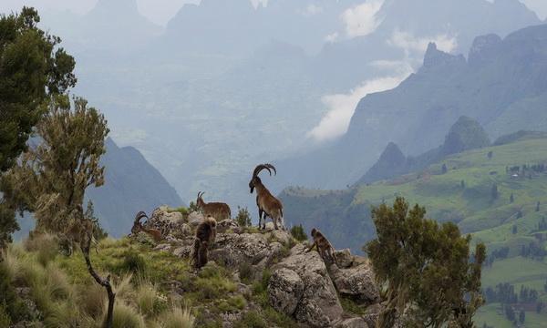 Уникальная флора и фауна Сыменских гор Эфиопии