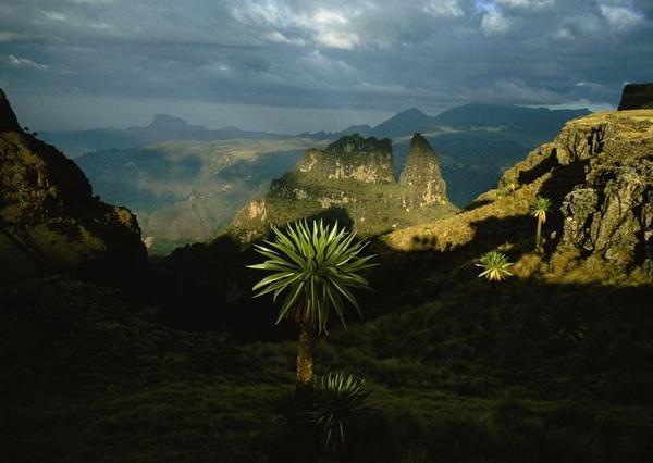 Уникальная фауна Сыменских гор Эфиопии