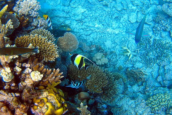 Обитатели Кораллового моря