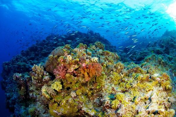 Морская фауна Кораллового моря