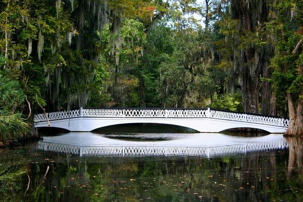 Луизианский мох