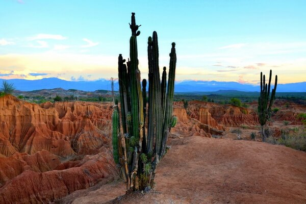Флора пустыни Татакоа в Колумбии