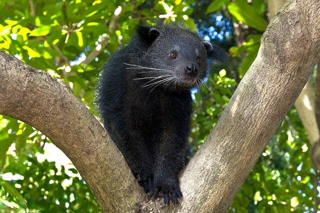 Животные Таиланда - основная фауна с фото и описанием