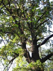 Лес Скаржинского в Трикратах