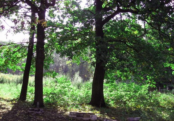 Трикратский лес - основные достопримечательности