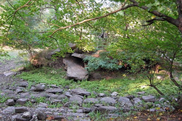 Трикратский лес на Николаевщине