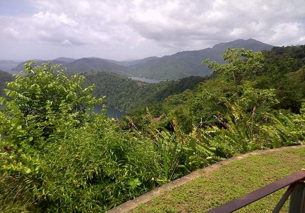 Мангровые леса Тринидада