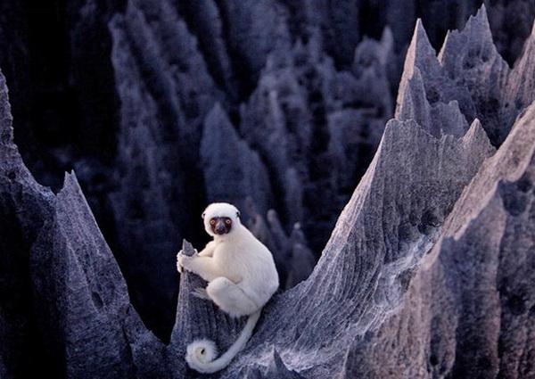 Цинги-де-Бемараха, Мадагаскар