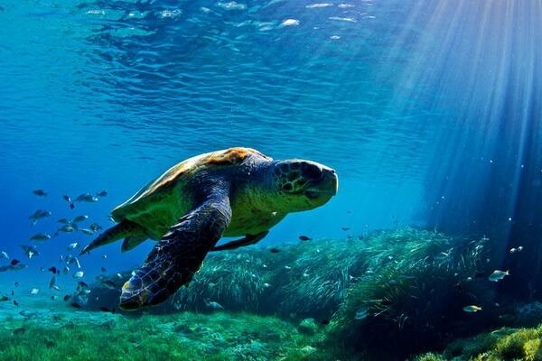 Фауна Греции - Морские черепахи в заповеднике Закинфа