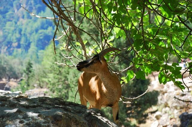 Уникальная фауна Греции