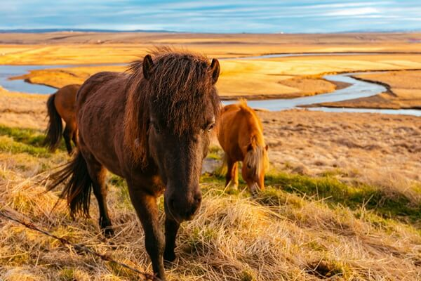 Лучшие веломаршруты Исландии с фото и описанием - Свалвогарская трасса, Вестфирдир