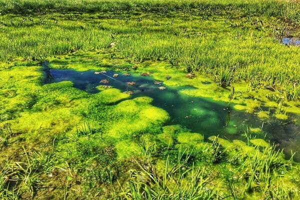 Как образуется болото