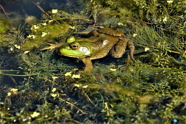 Образование болот на месте водоёмов