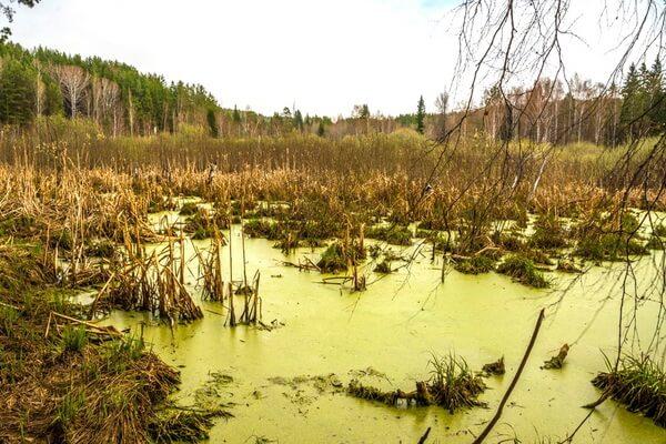 Виды болот - Низинные (эвтрофные) болота