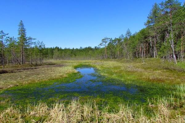 Виды болот - Переходные (мезотрофные) болота
