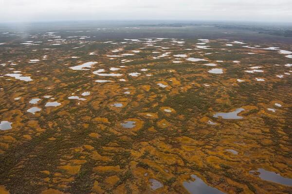 Виды болот - Грядово-мочажинные болота