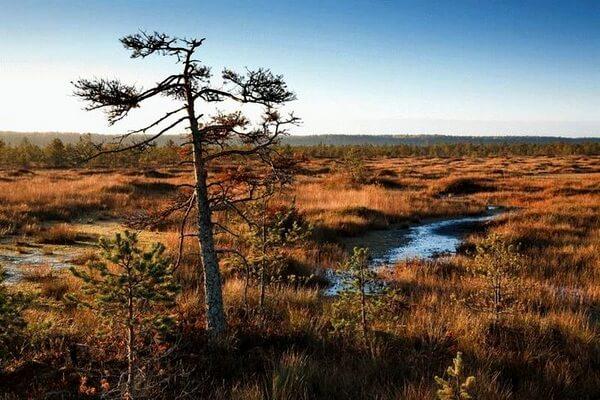 Виды болот по типу микрорельефа - Выпуклые болота