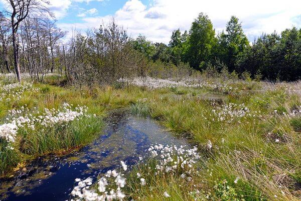 Признаки непроходимого болота