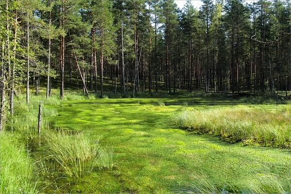 Чаруса - разновидность непроходимого болота