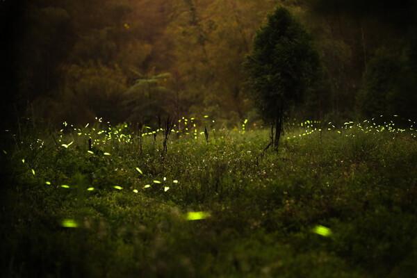 Свойства болот - Блуждающие огни и мерцающие огоньки