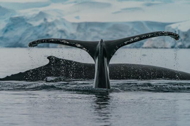 Семейства и виды китов - фото, названия, описание