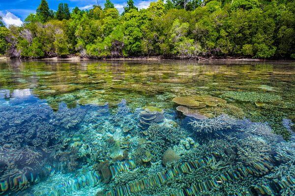 Виды коралловых рифов - Окаймляющие рифы