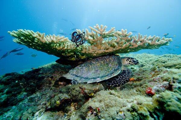 Значение коралловых рифов