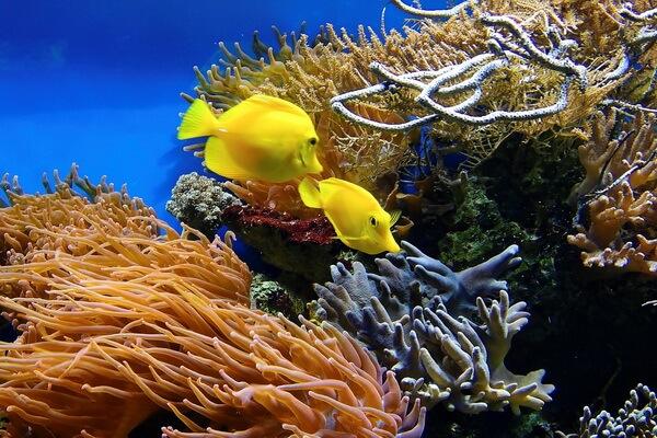 Виды коралловых рифов и их значение