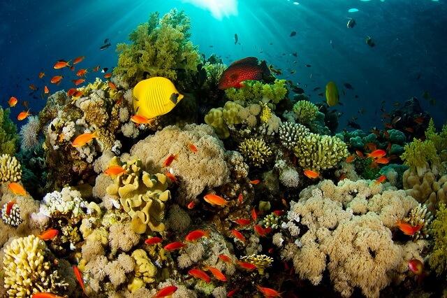 Виды коралловых рифов - классификация с фото-примерами