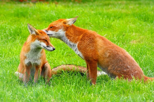 Виды лисиц с фото, названиями, описанием