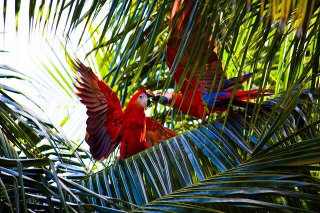 Виды попугаев ара - фото, названия, описание