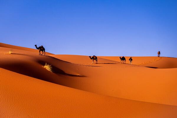 Виды пустынь - Субтропическая пустыня (пример - пустыня Сахара)