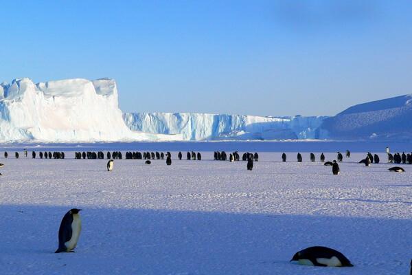 Виды пустынь - Ледяные (полярные) пустыни (пример - Антарктида)