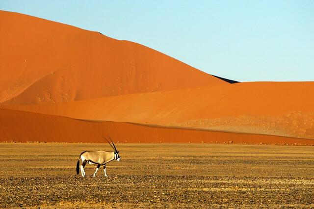 Виды пустынь - фото, характеристика и примеры