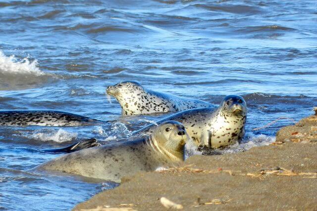 Виды тюленей с фото, названиями и описанием