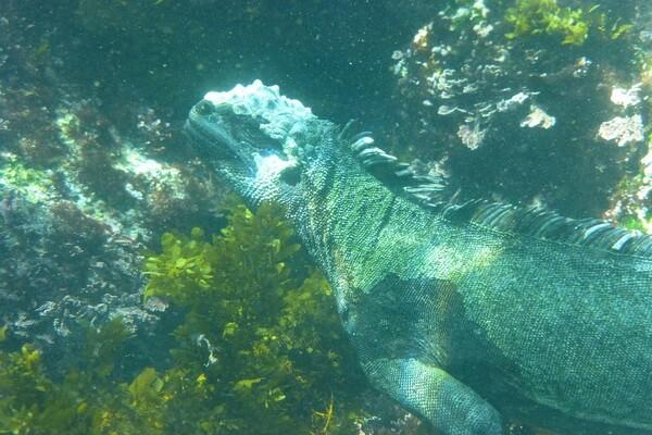 Самые красивые национальные парки мира - Галапагосские острова, Эквадор