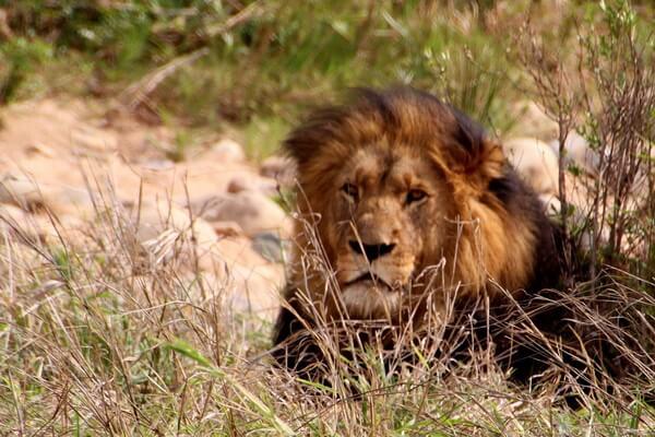 Самые красивые национальные парки - Крюгер, ЮАР