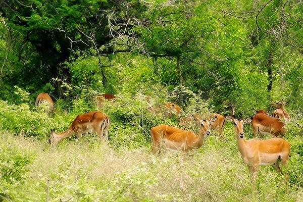 Самые красивые национальные парки мира - Крюгер, ЮАР