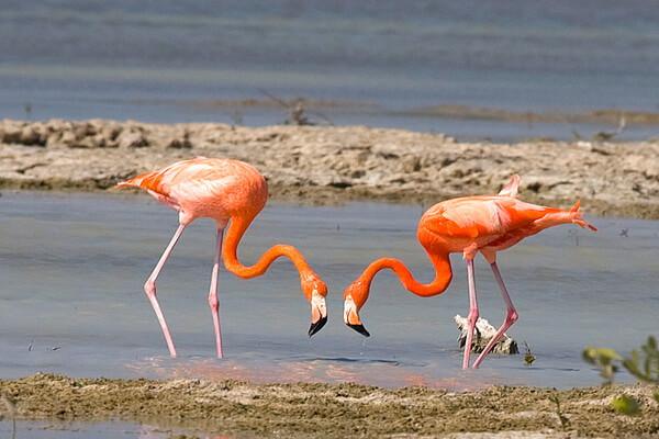 Самые красивые национальные парки - Полуостров Сапата, Куба