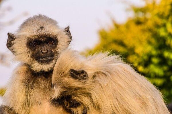 Самые красивые национальные парки - Рантхамбор, Индия