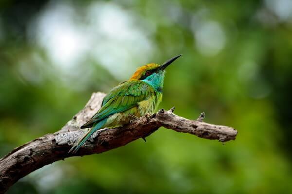 Самые красивые национальные парки мира - Яла, Шри-Ланка