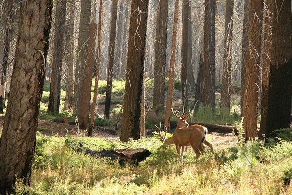 Фауна Йосемити