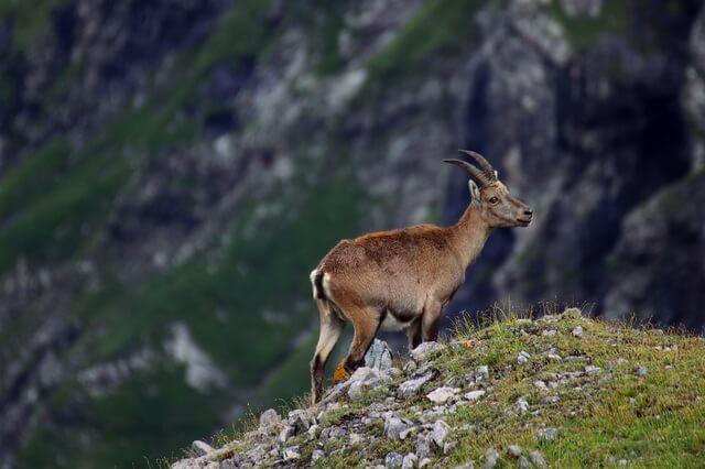 Животные Афганистана - основные виды с фото, названиями и описанием