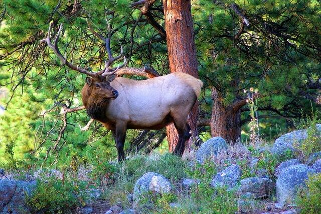 Животные Аляски - фото, названия, описание