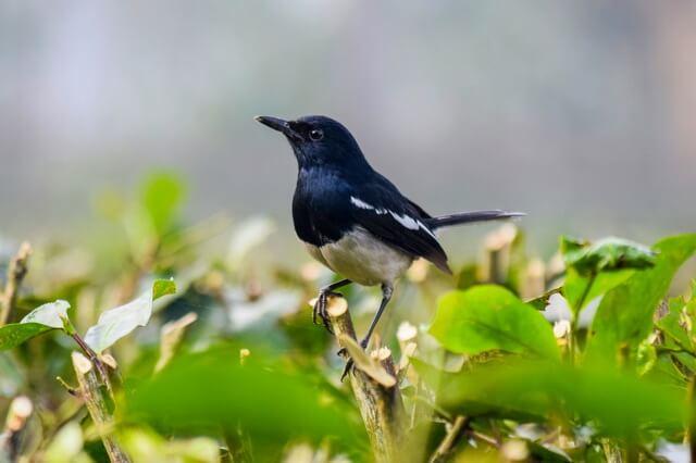 Животные и птицы Бангладеш - фото, названия, описание