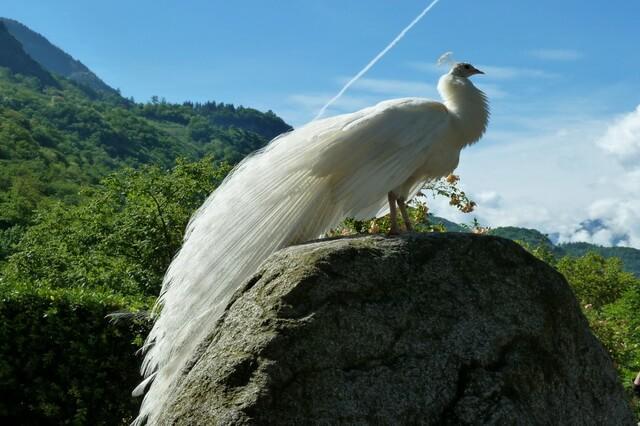 Животные и птицы белого цвета - фото, названия, описаниеЖивотные и птицы белого цвета - фото, названия, описание