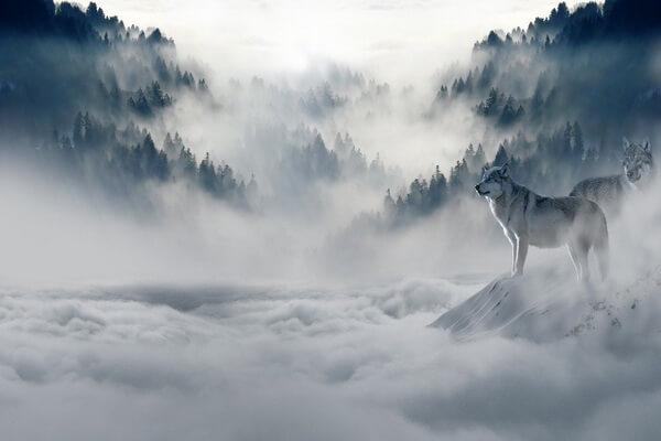 Животные Болгарии с фото и описанием - Волки