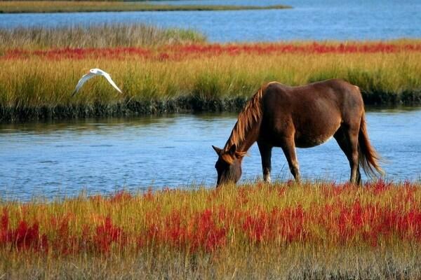 Животные Болгарии с фото и описанием - Полудикие лошади