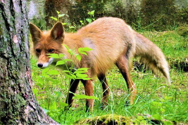 Животные Болгарии - фото, названия, описание
