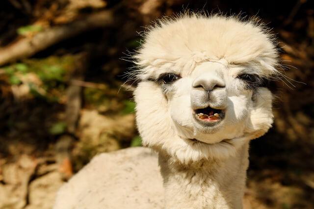 Животные Боливии - фото, названия, описание